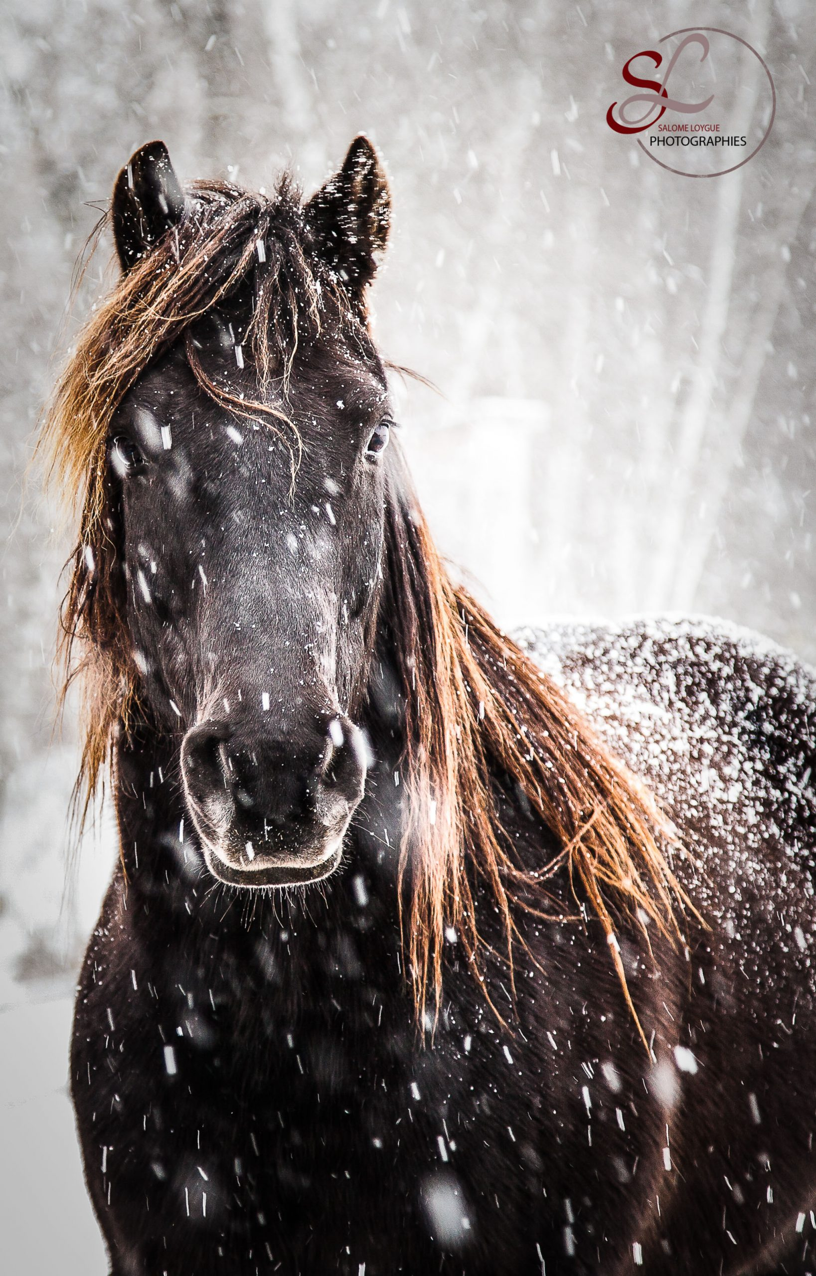 Photographie: Winter is coming.